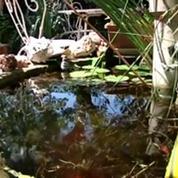 Chikungunya : forte prolifération des moustiques tigres en France