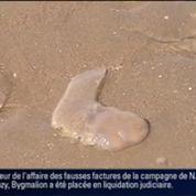 L'été de Fanny: La prolifération des méduses –