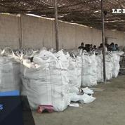 Trois tonnes de cocaïne destinées à l'Europe saisies au Pérou