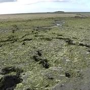 Algues vertes: vers de nouvelles plaintes