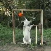 Même les chiens se mettent au Ice Bucket Challenge