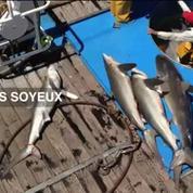 Pêche au thon : la vidéo choc de Greenpeace
