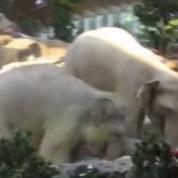Un éléphanteau en difficulté secouru par ses pairs