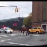 Un cheval dans les rues de Manhattan