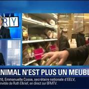BFM Story: Droit des animaux: soyons humains avec les bêtes, Franz-Olivier Giesbert