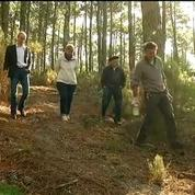 Résine de pin : le retour du gemmage dans les forêts d'Aquitaine