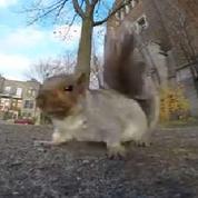 Une petite caméra volée... par un écureuil