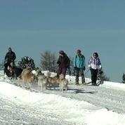 Succès des ballades en chiens de traîneau à La Plagne