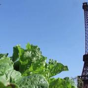 Chine : une réplique de la tour Eiffel au beau milieu d'un champ de légumes