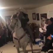 Il fait danser un cheval dans son salon