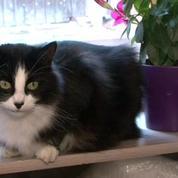 Un chat parcourt 1.200 km pour rentrer chez lui