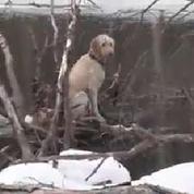 Ils bravent le froid et l'eau glacée pour secourir un chien