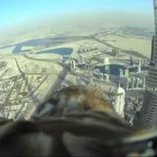 Un aigle royal vole depuis la Burj Khalifa