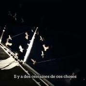 Un bateau de la Volvo Ocean Race attaqué par des dizaines d'oiseaux