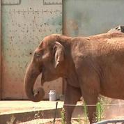 Les éléphantes Baby et Népal sont arrivées à Monaco