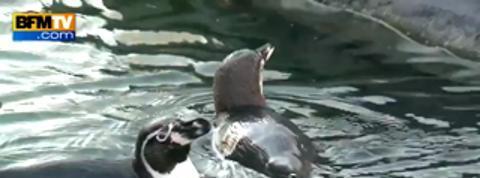 Ouverture du parc zoologique de Vincennes: l'heure est aux derniers préparatifs