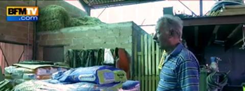 Débat relancé sur le maïs transgénique, certains agriculteurs réclament l'autorisation