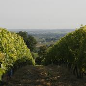 Les vignobles de Bourgogne dévastés par la grêle