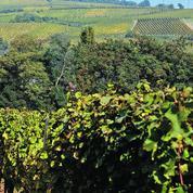 D'Alsace au Roussillon, les terroirs s'ouvrent au tourisme