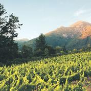 Healdsburg, l'autre eldorado viticole de Californie