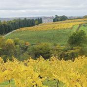 Le vignoble de la Coulée de Serrant quitte Interloire