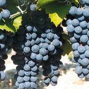 Les vins naturels font leur salon à Grenoble !