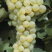 Acide sulfurique : Douze viticulteurs, un oenologue et un droguiste bordelais condamnés