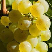 Connaissez-vous le vin de New-York ?